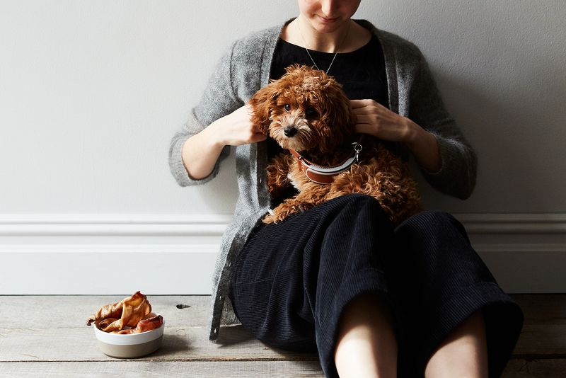 Yes, I'm Making My Own Pig's Ear Dog Treats. Here's Why.