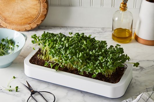 6 Indoor Gardening Project Ideas for *Any* Size of Home