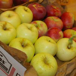 Nobby Apple Cake
