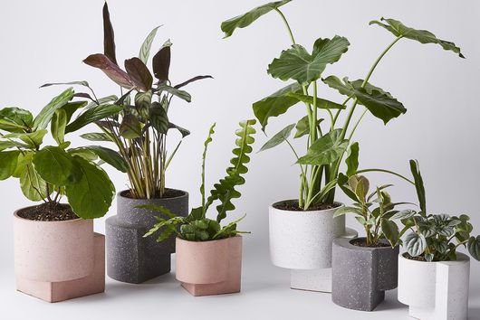 How to Keep Your Plants Alive While You're On Vacation