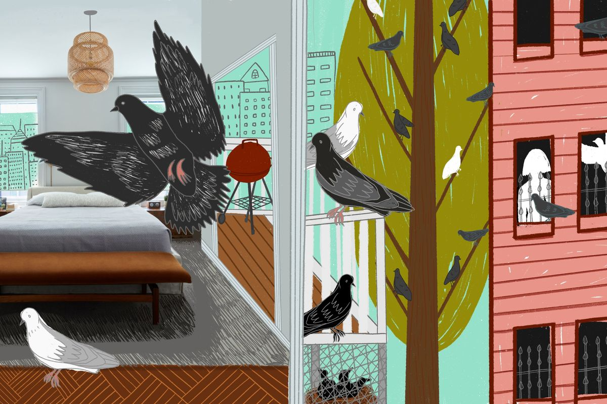 A Pigeon Problem at Home and on the Deck, by Amanda Hesser