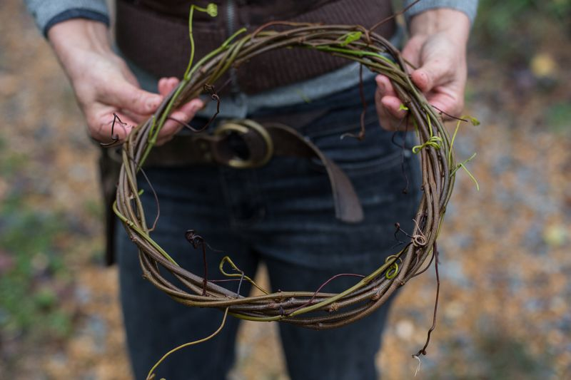 A circle of wisteria vine with the ends tucked in.