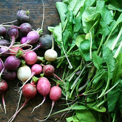 What to Do with an Overload of Radishes