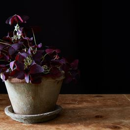 8 Edible Flowers to Brighten Your Garden—& Dinners