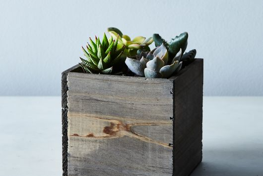 DIY Mini Succulent Garden