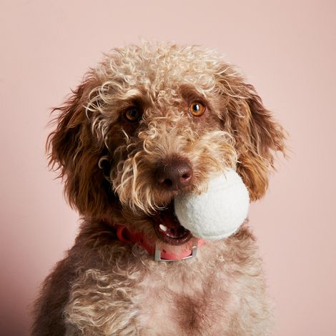Canine Tennis Balls