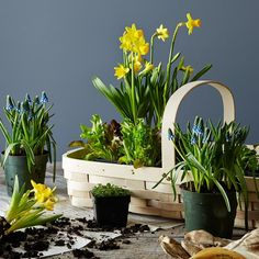 6 Gardening Tips That Are True for Absolutely Everyone (& Every Plant)