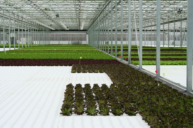 Green City Growers in Cleveland, OH, has a 3.25-acre hydroponic greenhouse.