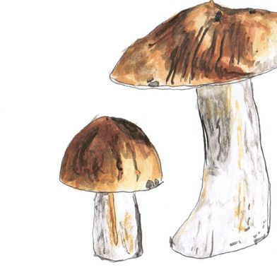An Illustrated Guide to Mushroom Foraging (& 10 Earthy, Savory Recipes)