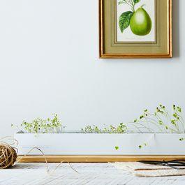 Microgreens Spice Window Box Kit
