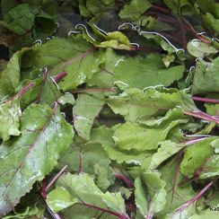 Sauteed Beet Greens with a Drizzle of Balsamic Syrup