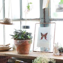 Heirloom Seed Art Packets (Spring & Summer Collections)