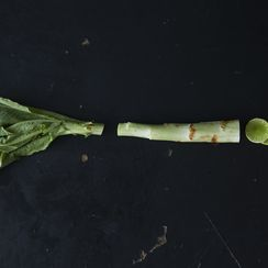 Celtuce and What to Do with It