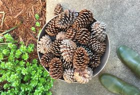 D670d4f2 a9cd 4c80 ab25 c3d94478a14b  pineconebucket