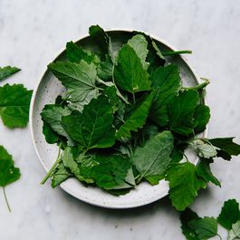 All About Lambsquarters (+ A Summer Frittata)
