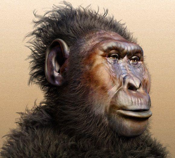 A rendering of Paranthropus boisei.