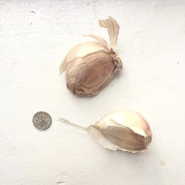 What's Going on with This Garlic?