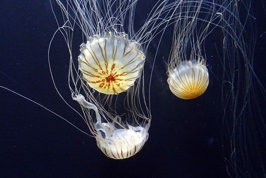 This Jellyfish Chip Could be the Snack Food of the Future