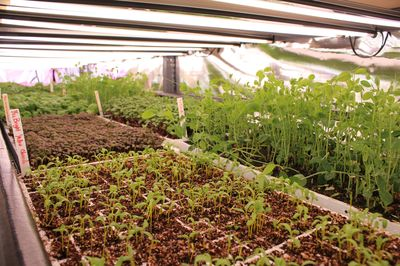How Hydroponic And Aquaponic Farming Works