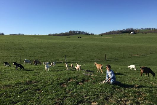 The Virginia Goat Cheese Farm That's A One-Woman Show