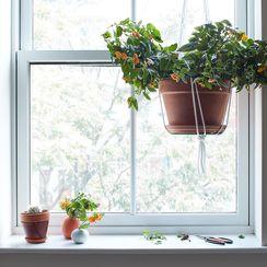 A Simple Trick for Instant Flower Arrangements