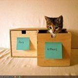 cattyb