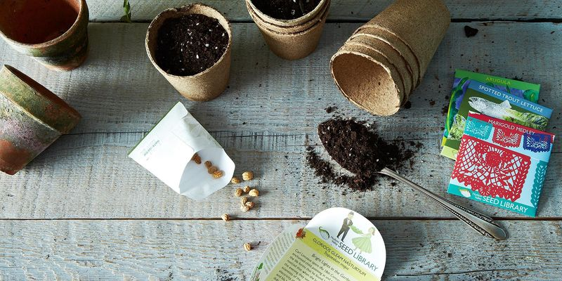 Choosing the Right Seeds & Plants for Your Garden