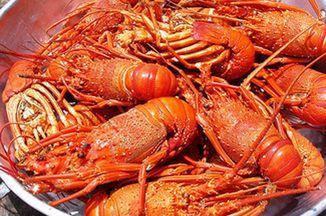 Dd33c201 85fa 4125 9c0e deb7d48eaedf  lobster