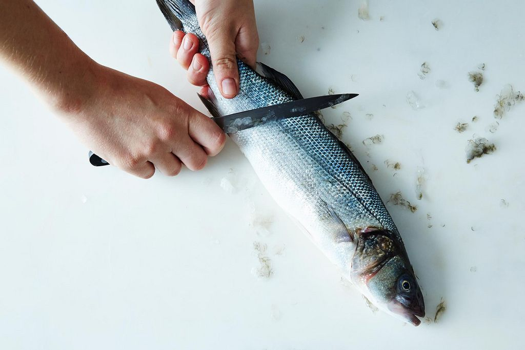 How to gut a fish for Get fish scale