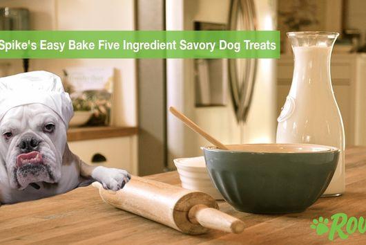 Easy Bake Five Ingredient Savory Dog Treats