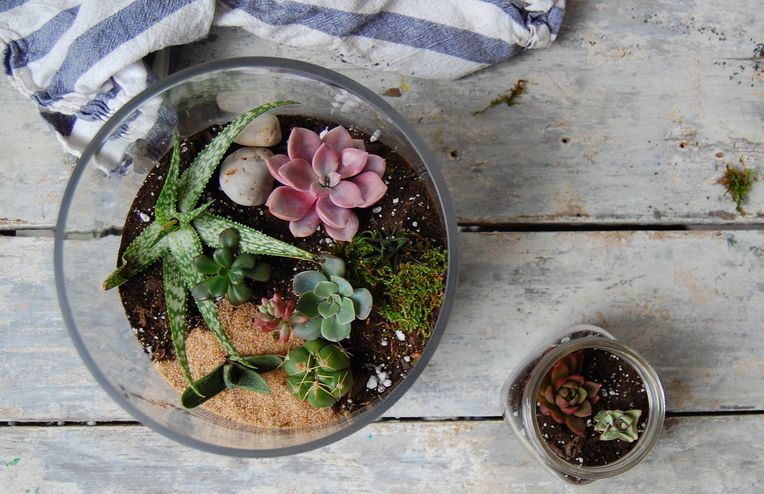 How to Make a Terrarium (and Keep it Alive)