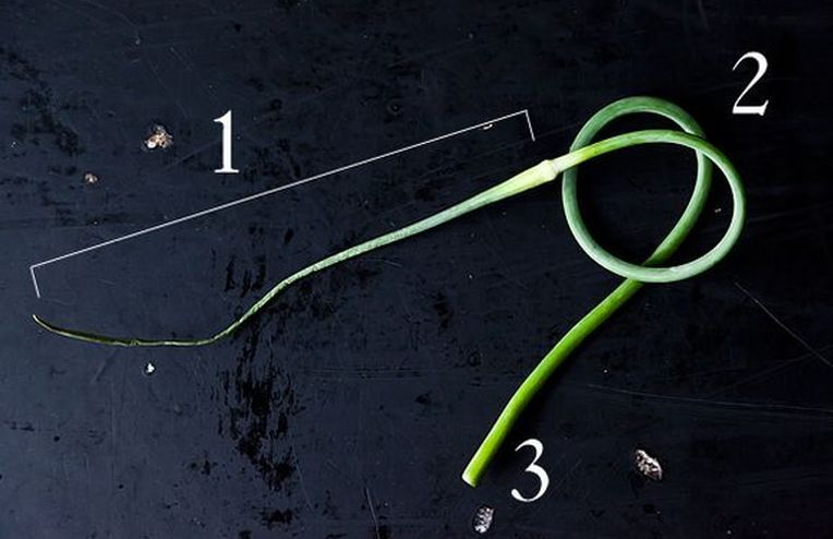 Down & Dirty: Garlic Scapes