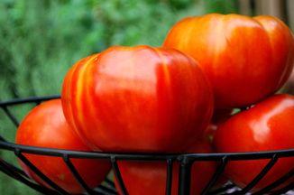 9a594b7d 475a 4bb1 bb81 6283e32460e3  dsc 0881 brandywine tomatoe