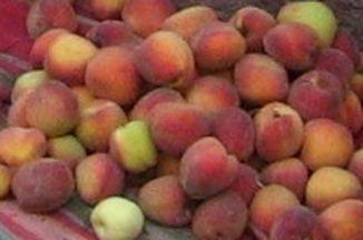 50d6dcd6 5b3d 4cb7 866f 119b2f9b700b  peru peaches