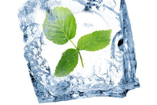 Aromatherapy - FRESH all Year round