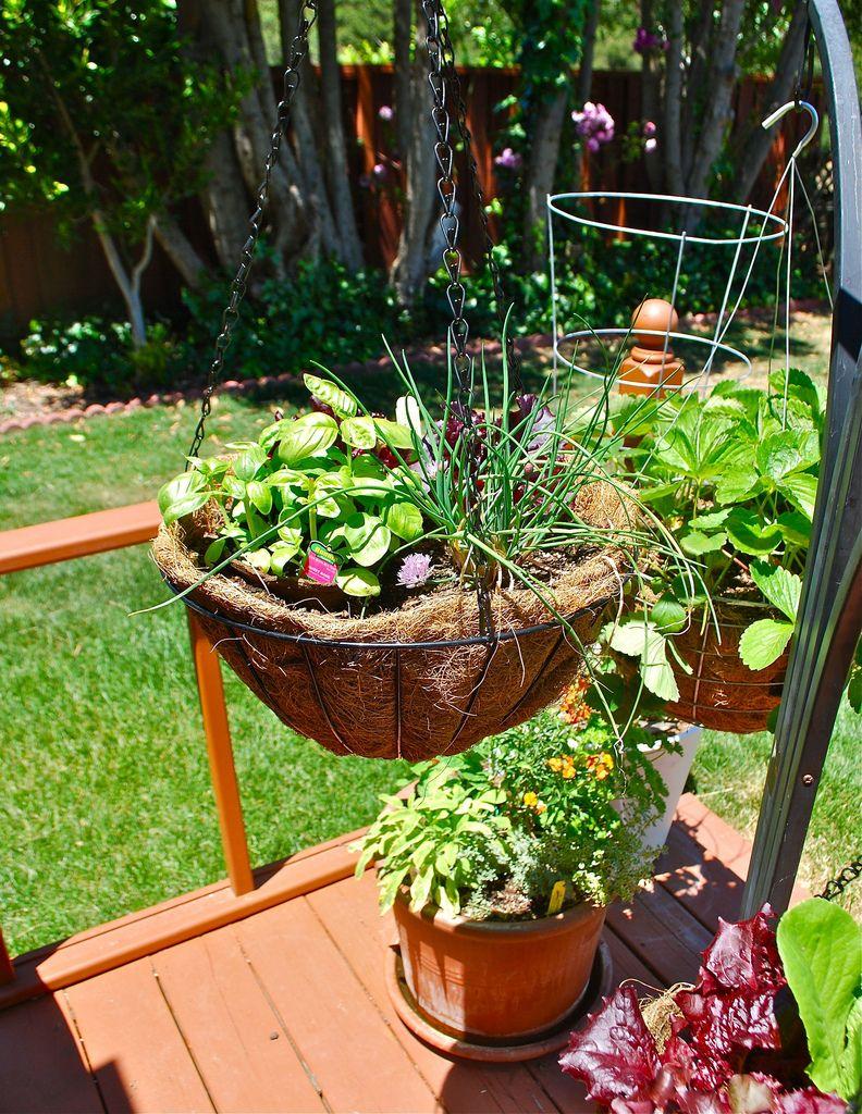 Rabbit-proof garden