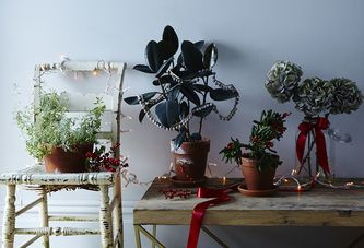 What You Should Trim Besides a Big, Messy Tree