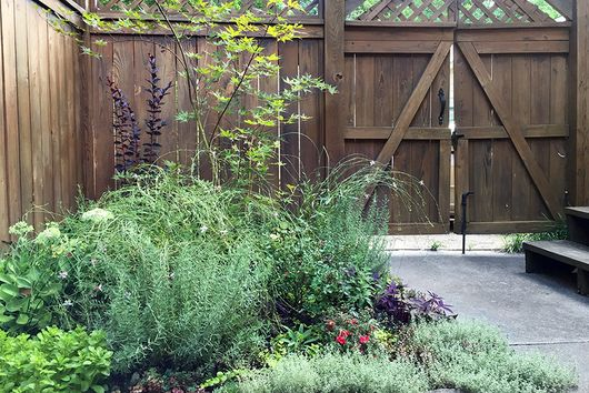 How I Grew the Lush Garden Oasis of My Dreams—in 30 Square Feet