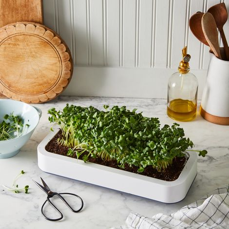 Countertop Microgreen Grower
