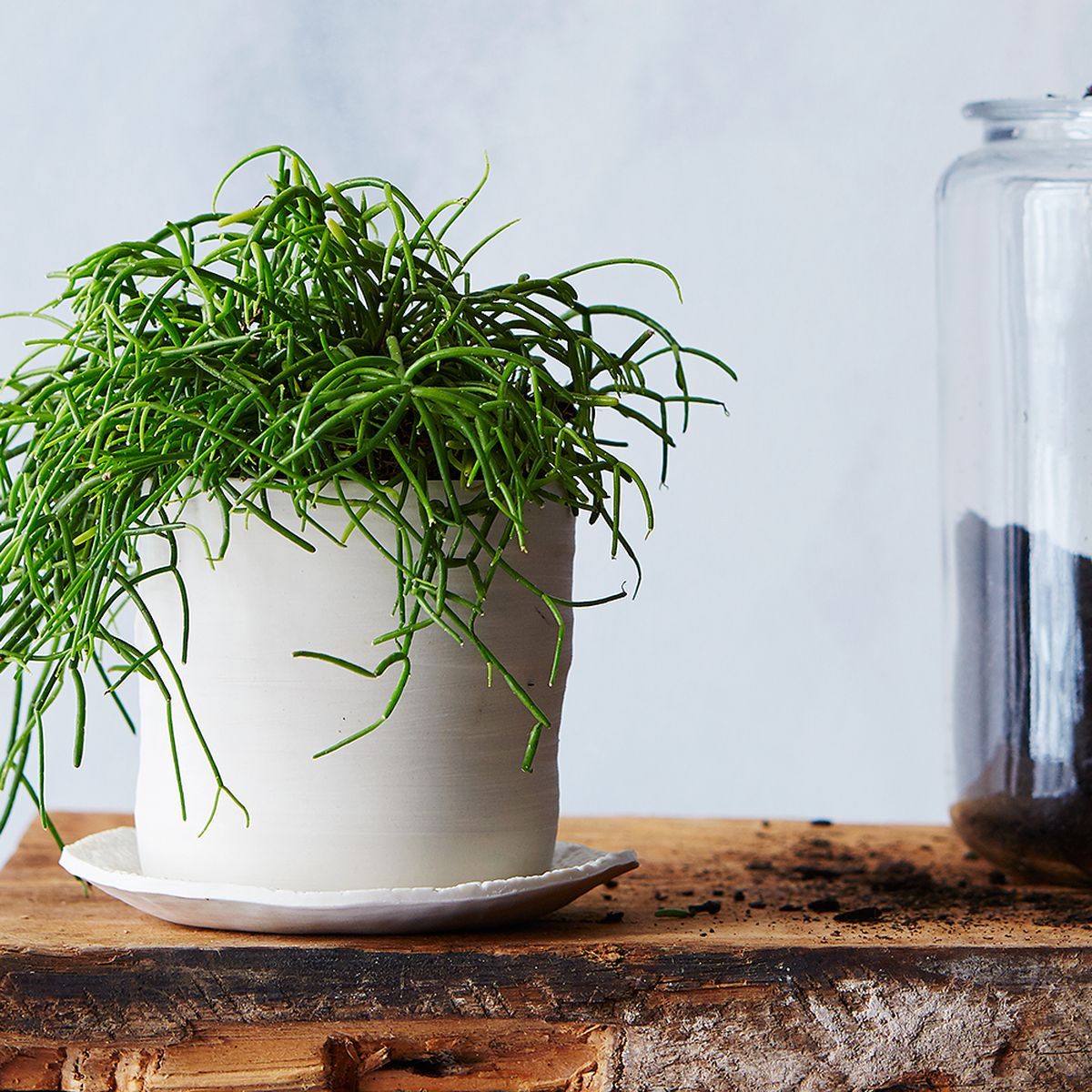 7 Common Houseplant Afflictions—and How to Cure Them All
