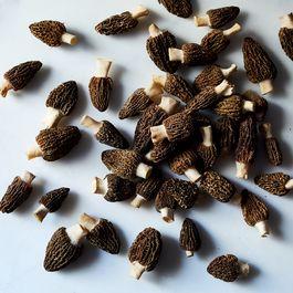 Wild Foraged Fresh Morels (2 lbs)