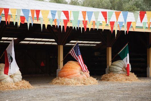 Meet the Man Who Grows Pumpkins as Big as Smart Cars