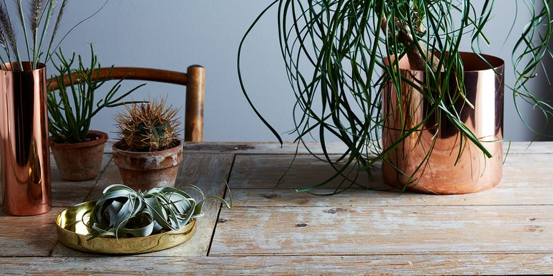 You Don't Need a Green Thumb to Take Care of These Hardy Indoor Plants