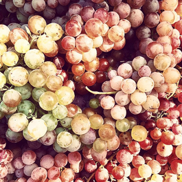 After 80 Years Away, the Bronx Grape is Back in New York