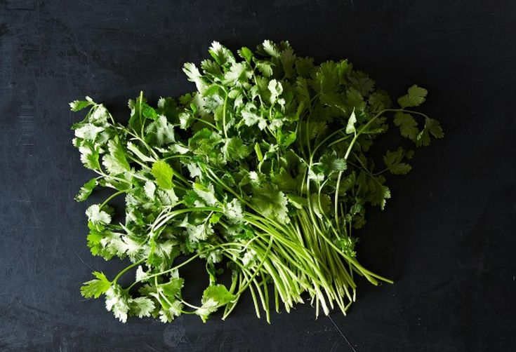 Is Your Cilantro Contaminated? Go Check!