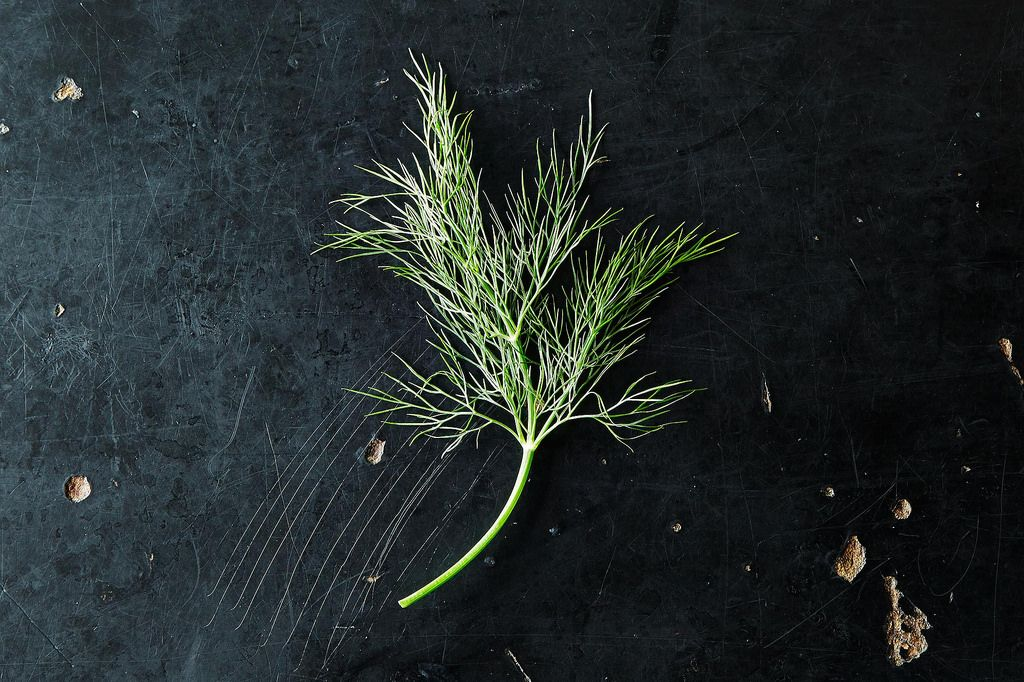 Dill and How to Use It from Stem to Seed, from Food52