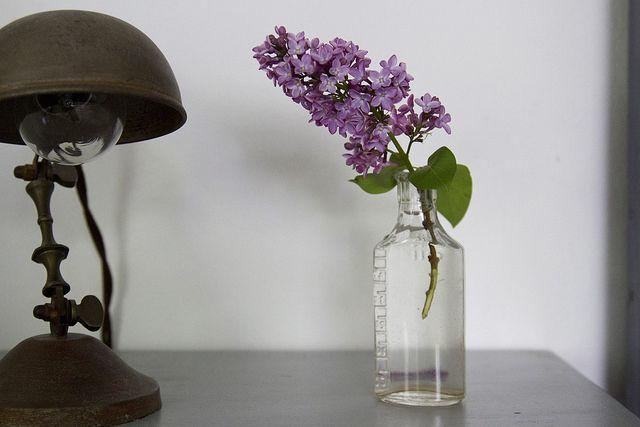 Lilacs by Reading My Tea Leaves, Erin Boyle