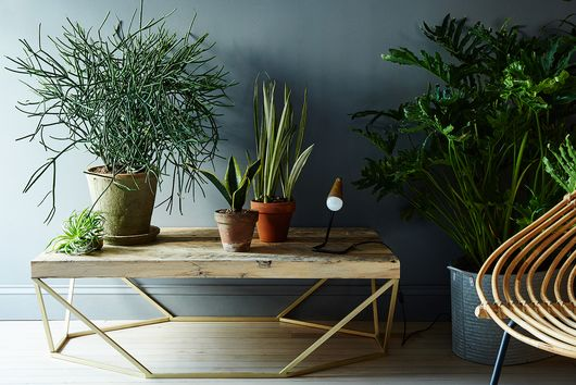 My Mom Says You're Taking Care of Your Indoor Plants All Wrong