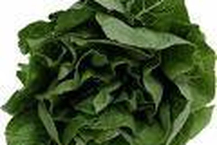 Spinach for the Kids