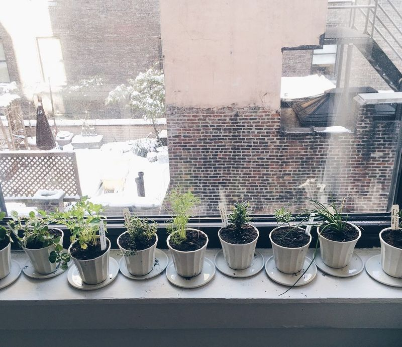 Food52's herb garden of 2015.